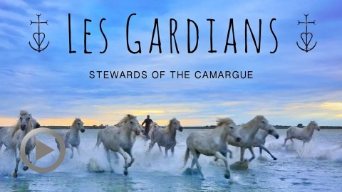 les-gardians-stewards-of-the-camargue